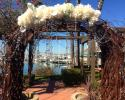 Birch  wedding arch with gems