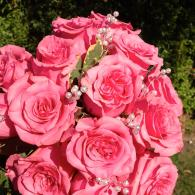 Pink Roses, White pearls